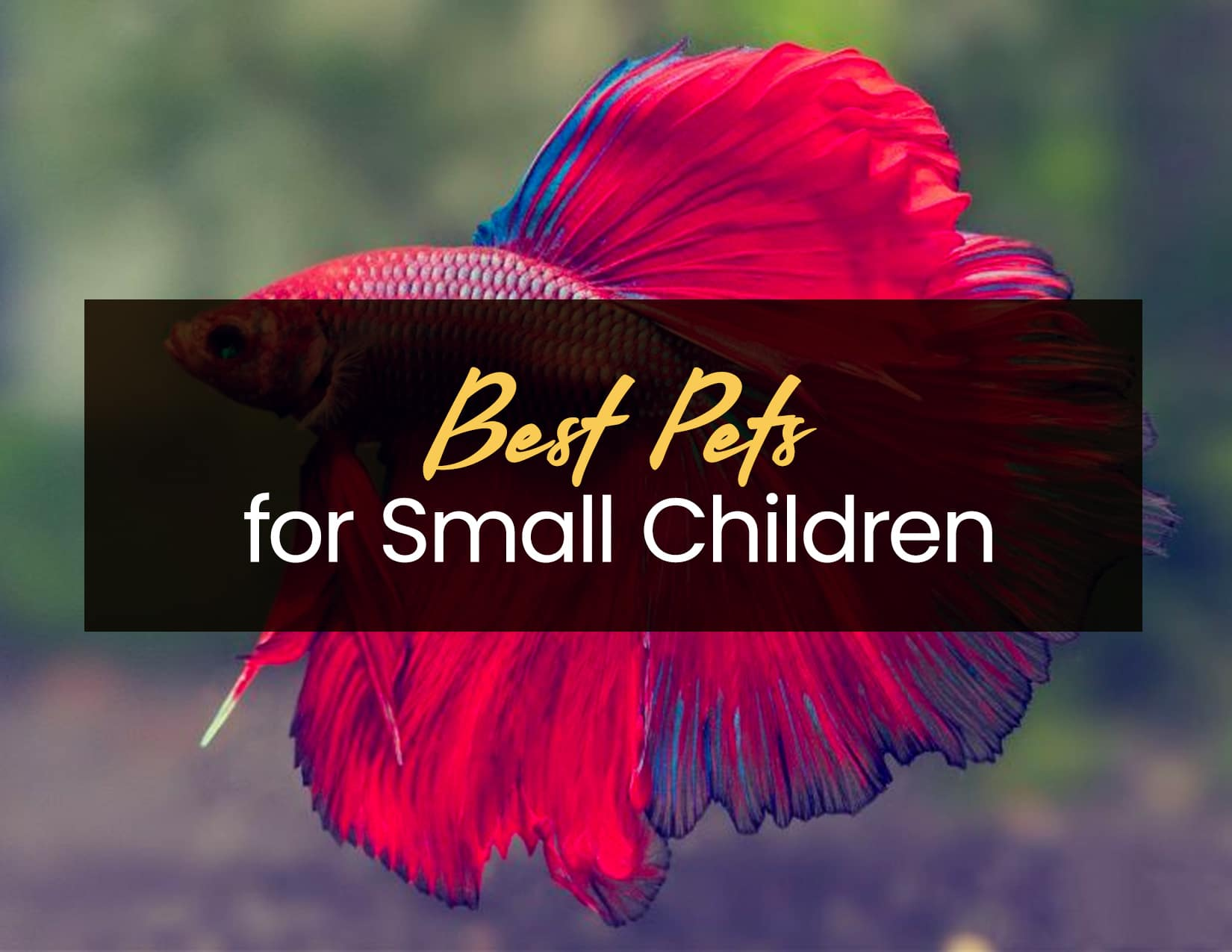 Best Pets for Small Children