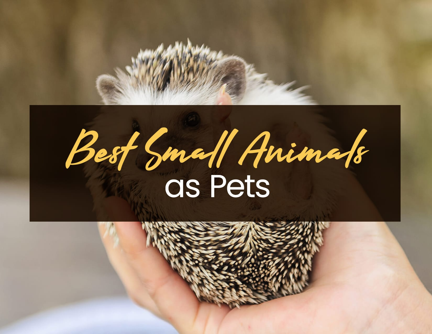 Best Small Animals as Pets