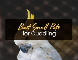 Best Small Pets for Cuddling