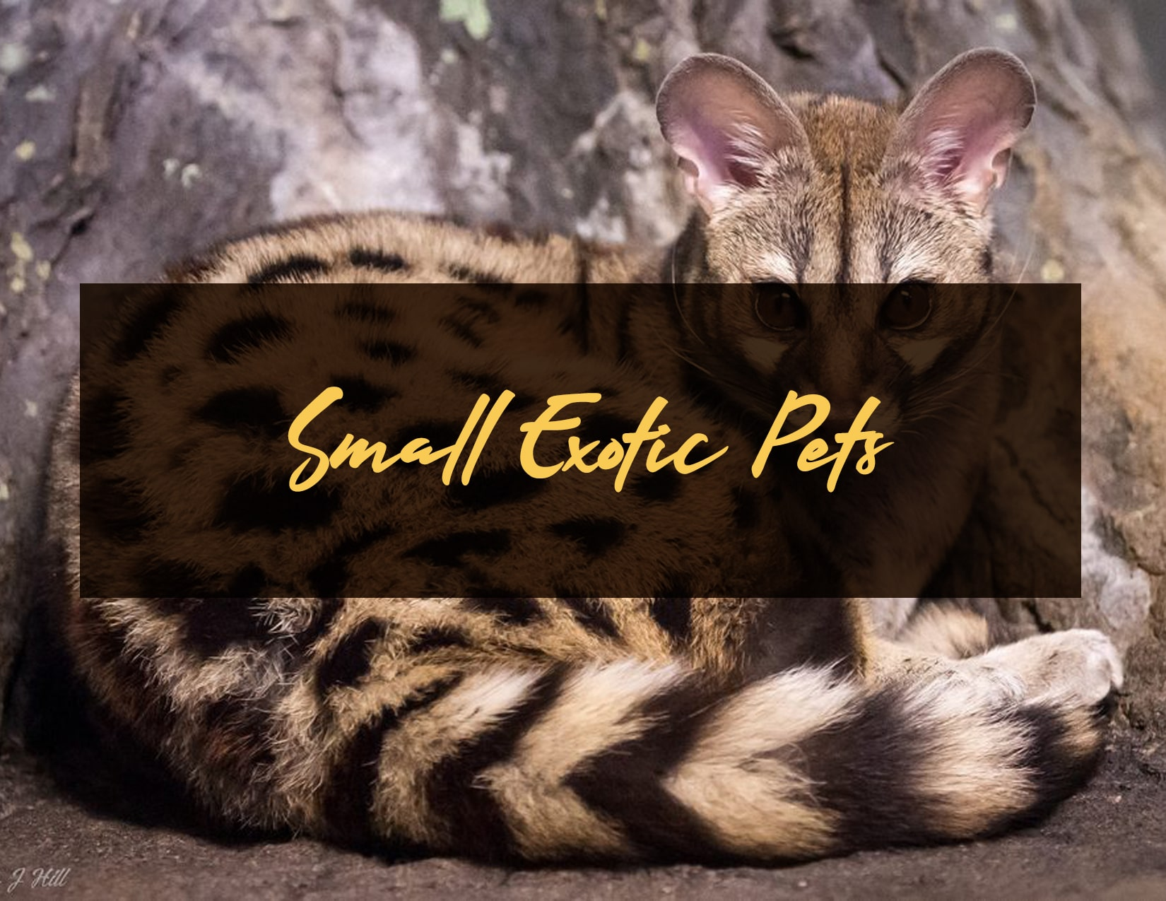 Small Exotic Pets