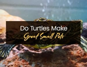 Turtles Make Great Small Pets1