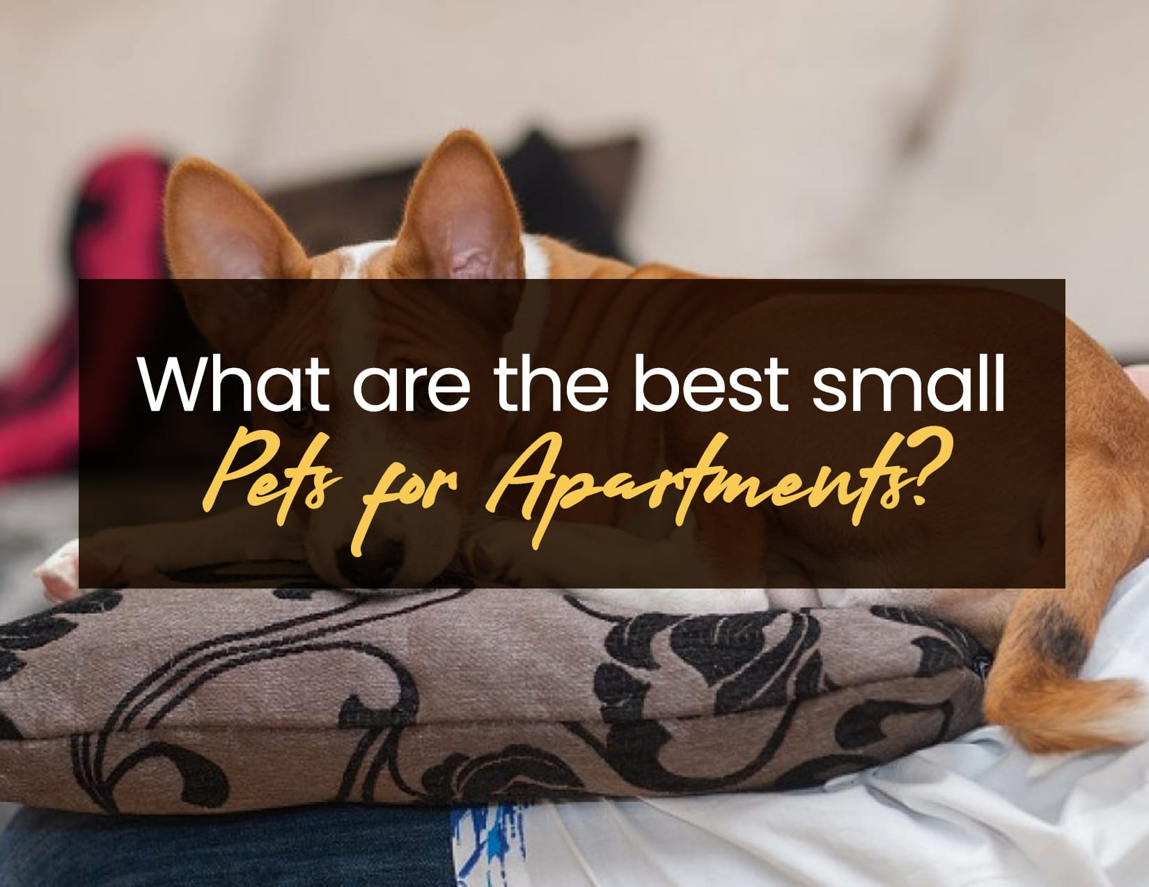 What are the Best Small Pets for Apartments
