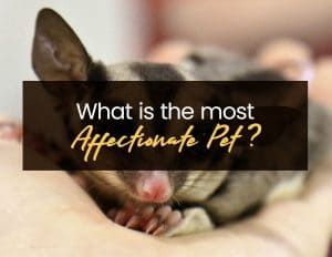 What is the most Affectionate Pet