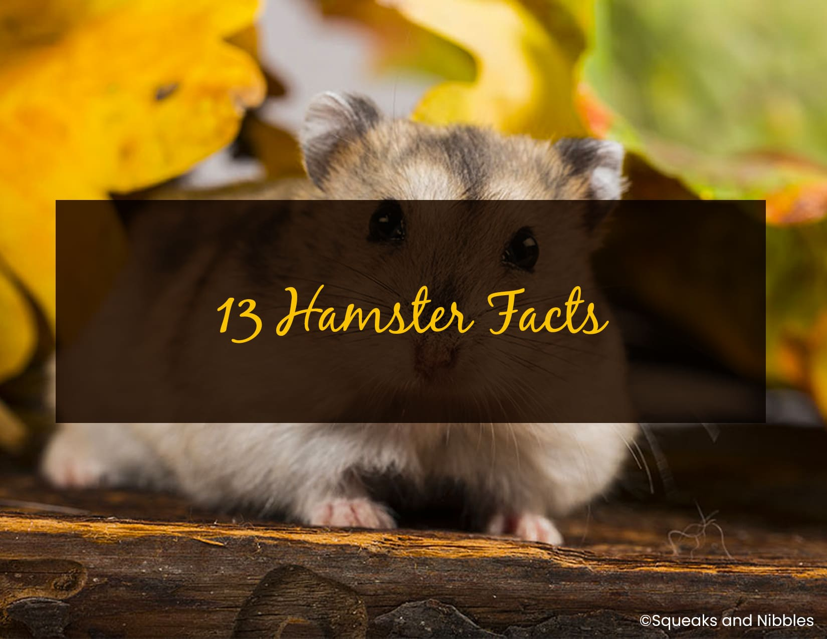13 Hamster Facts