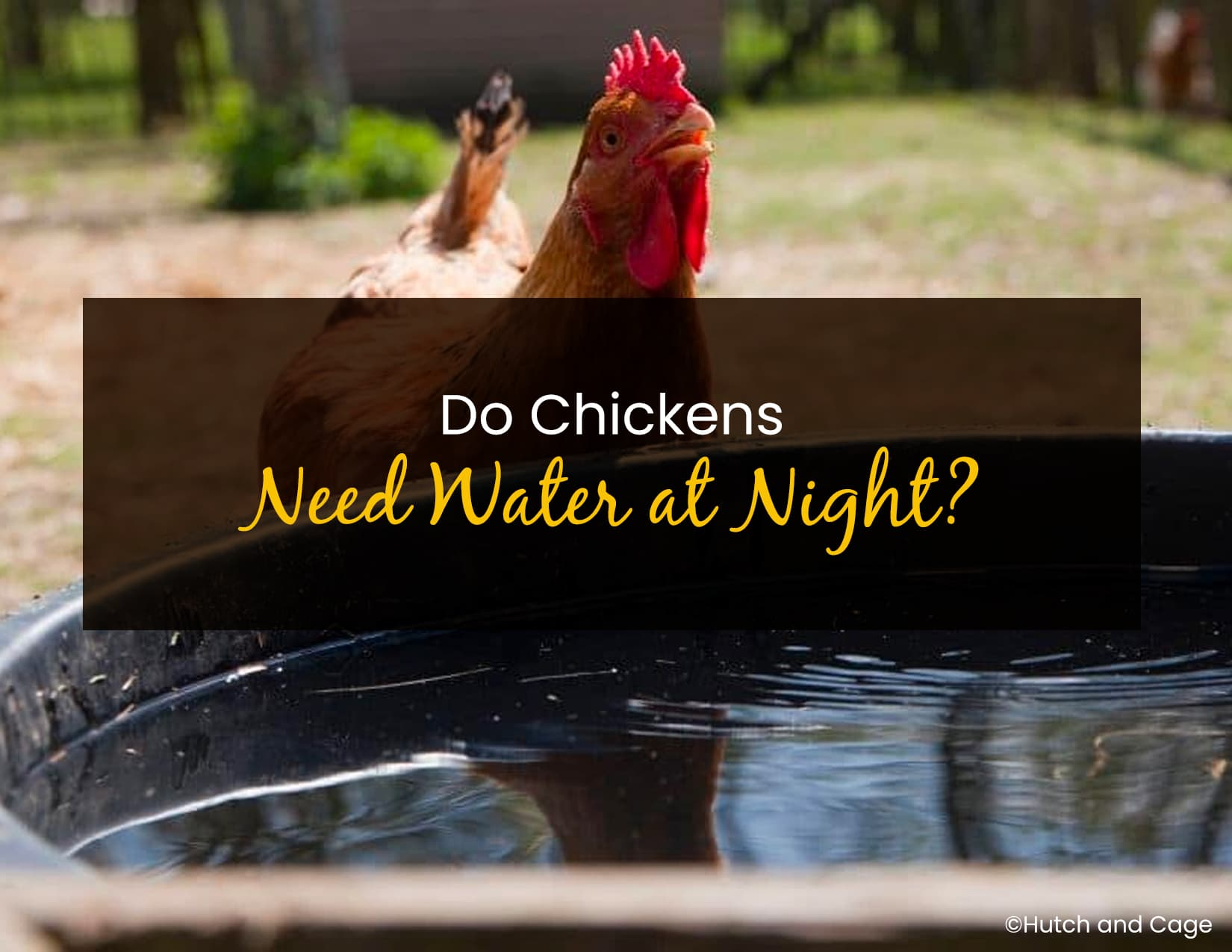 Do Chickens Need Water at Night