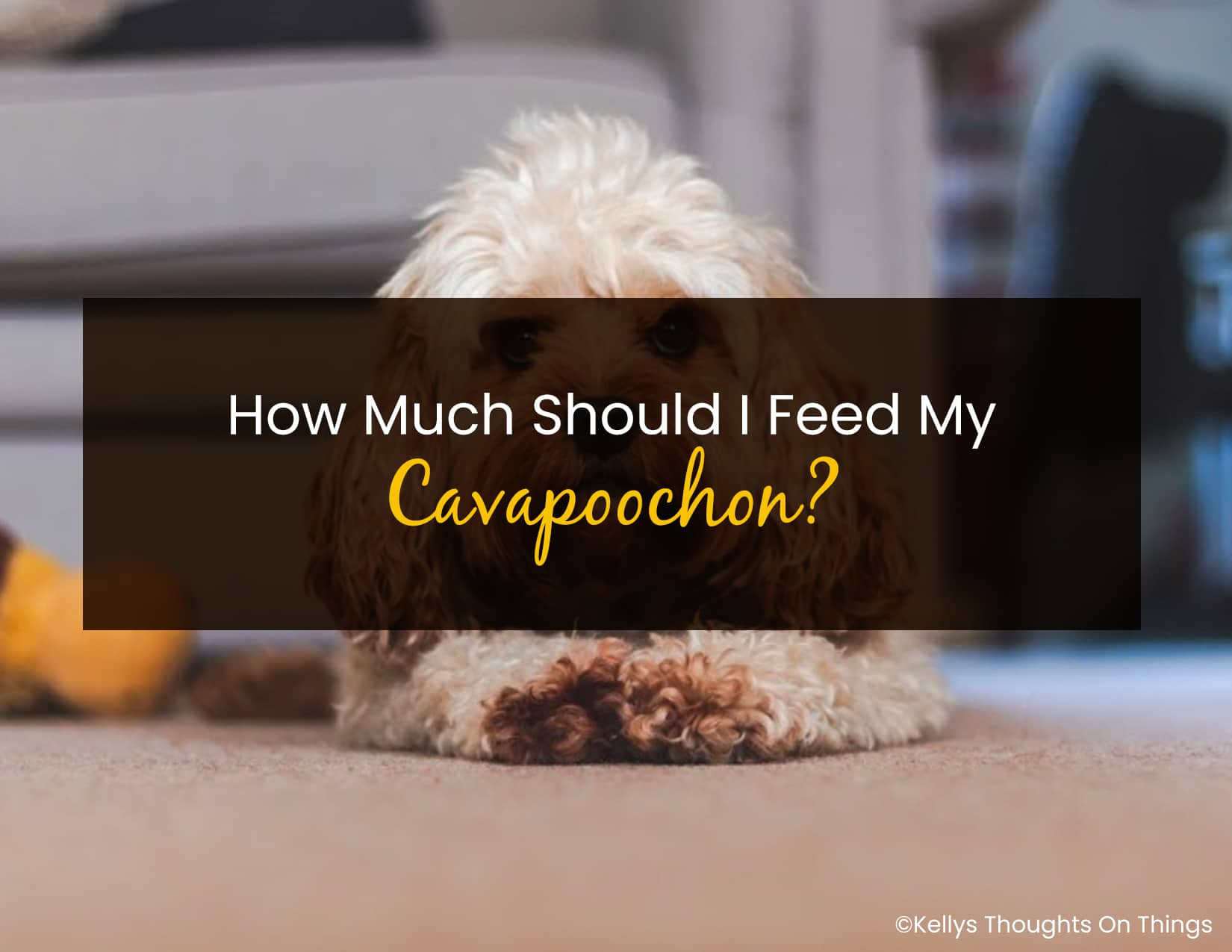 How Much Should I Feed My Cavapoochon