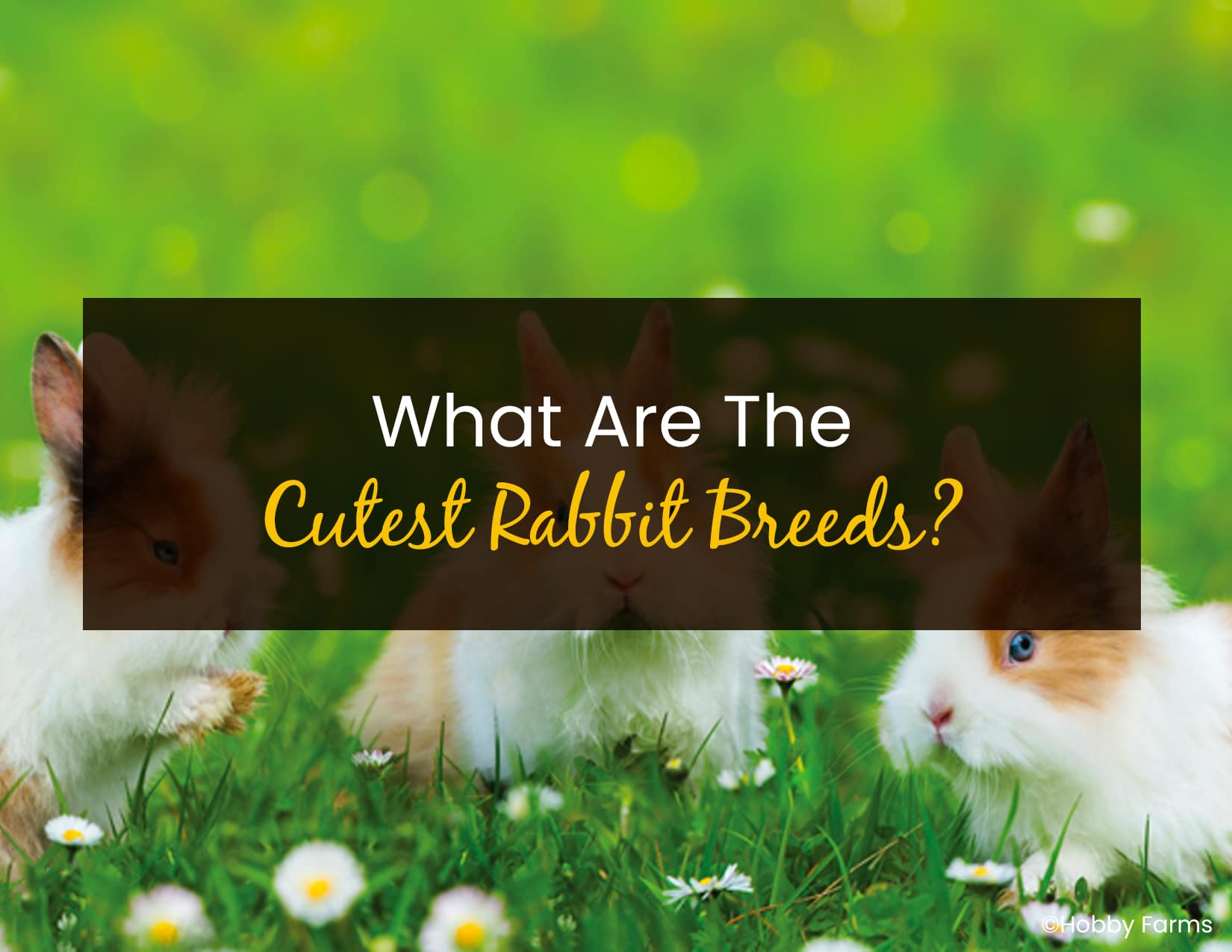 What Are The Cutest Rabbit Breeds