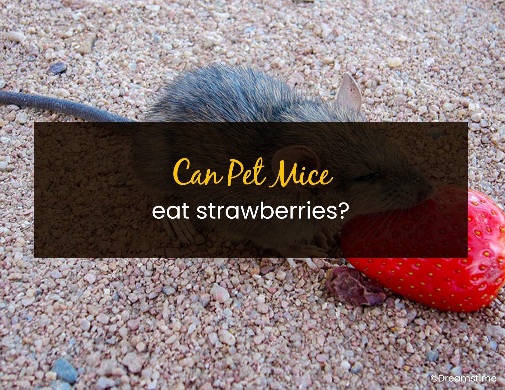 Can Pet Mice Eat Strawberries