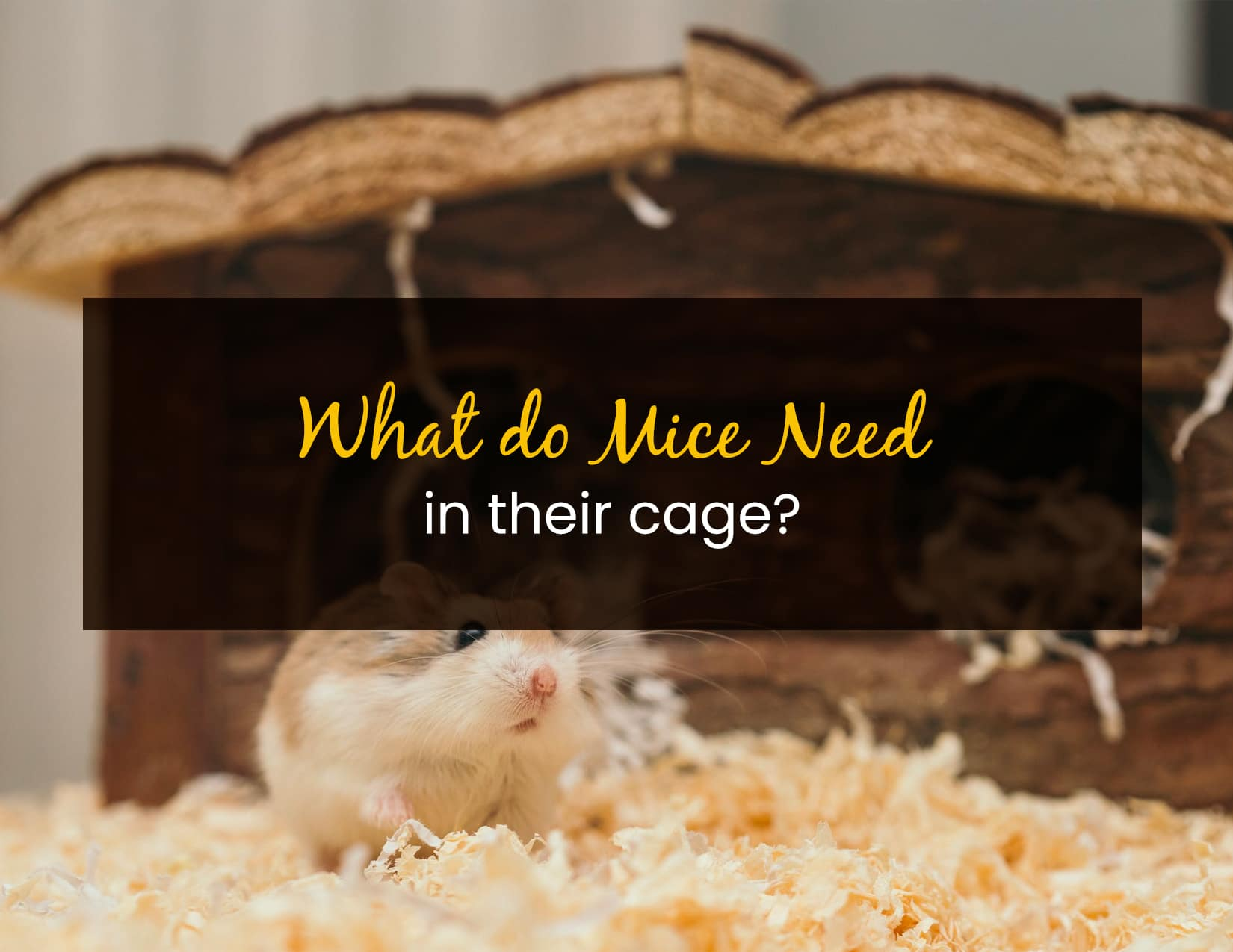 What Do Mice Need In Their Cage