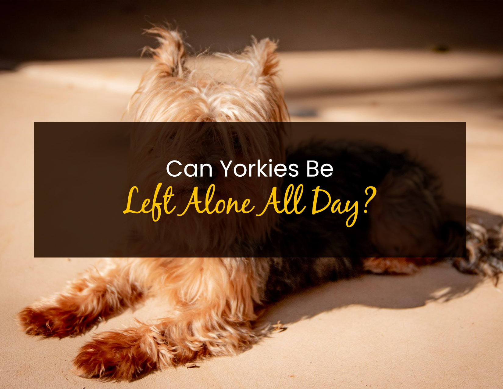 Can Yorkies Be Left Alone