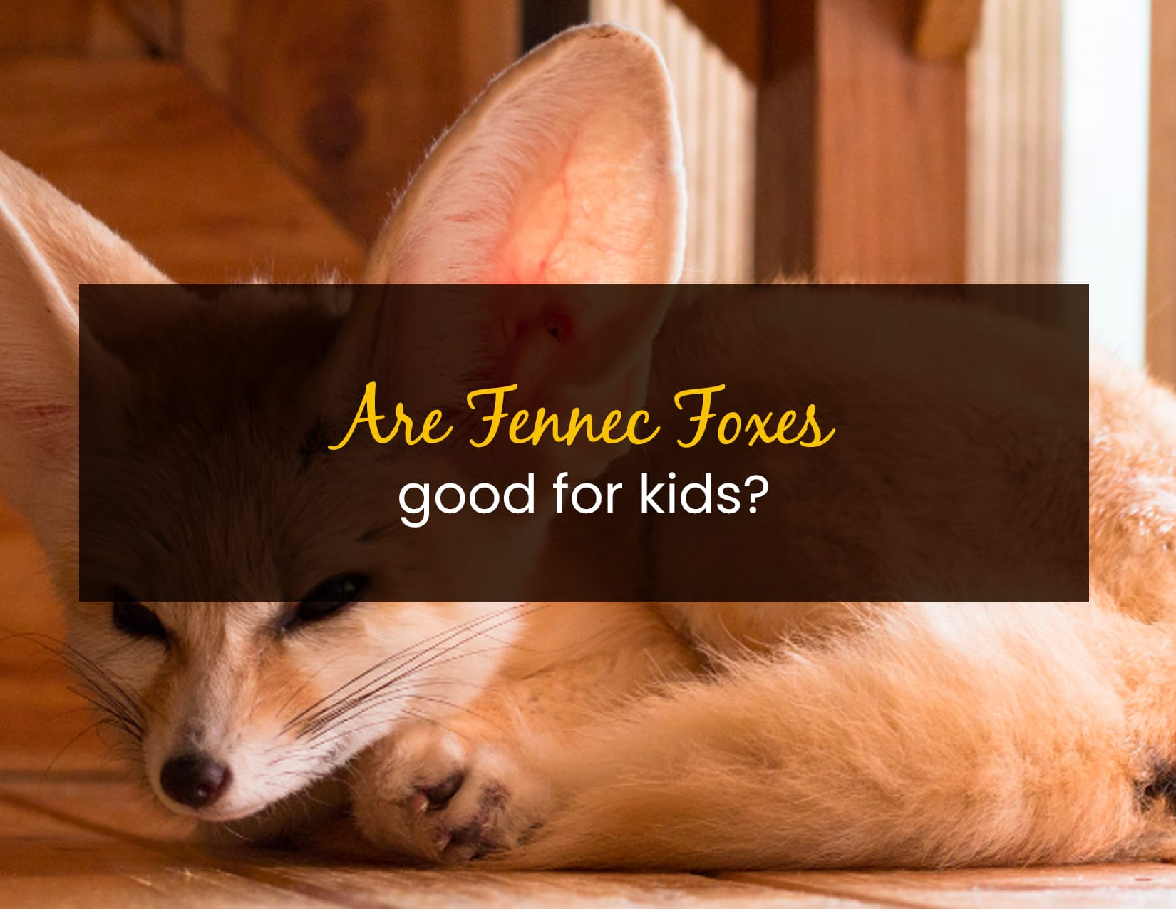 Are Fennec Foxes Good for Kids - WP