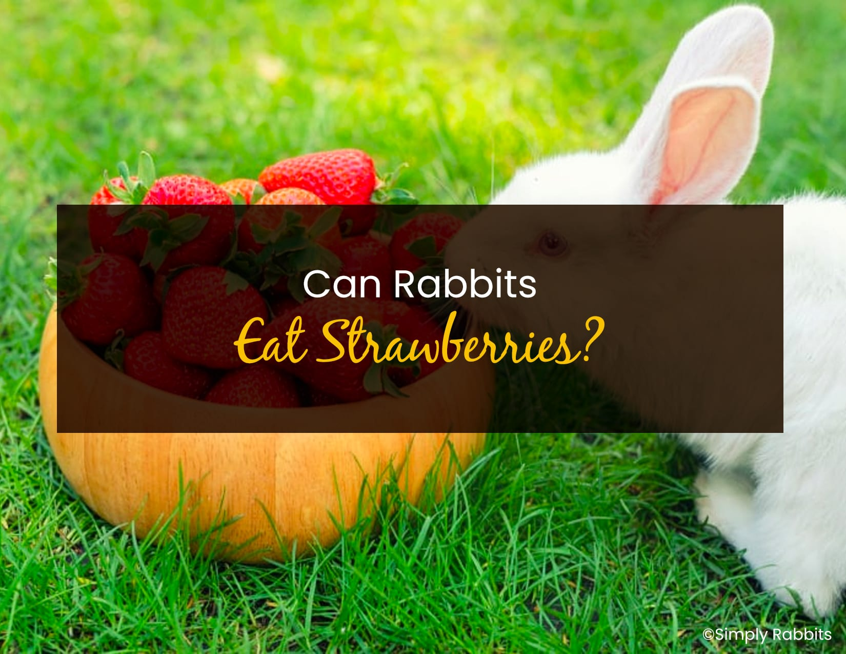 Can Rabbits Eat Starberries - WP