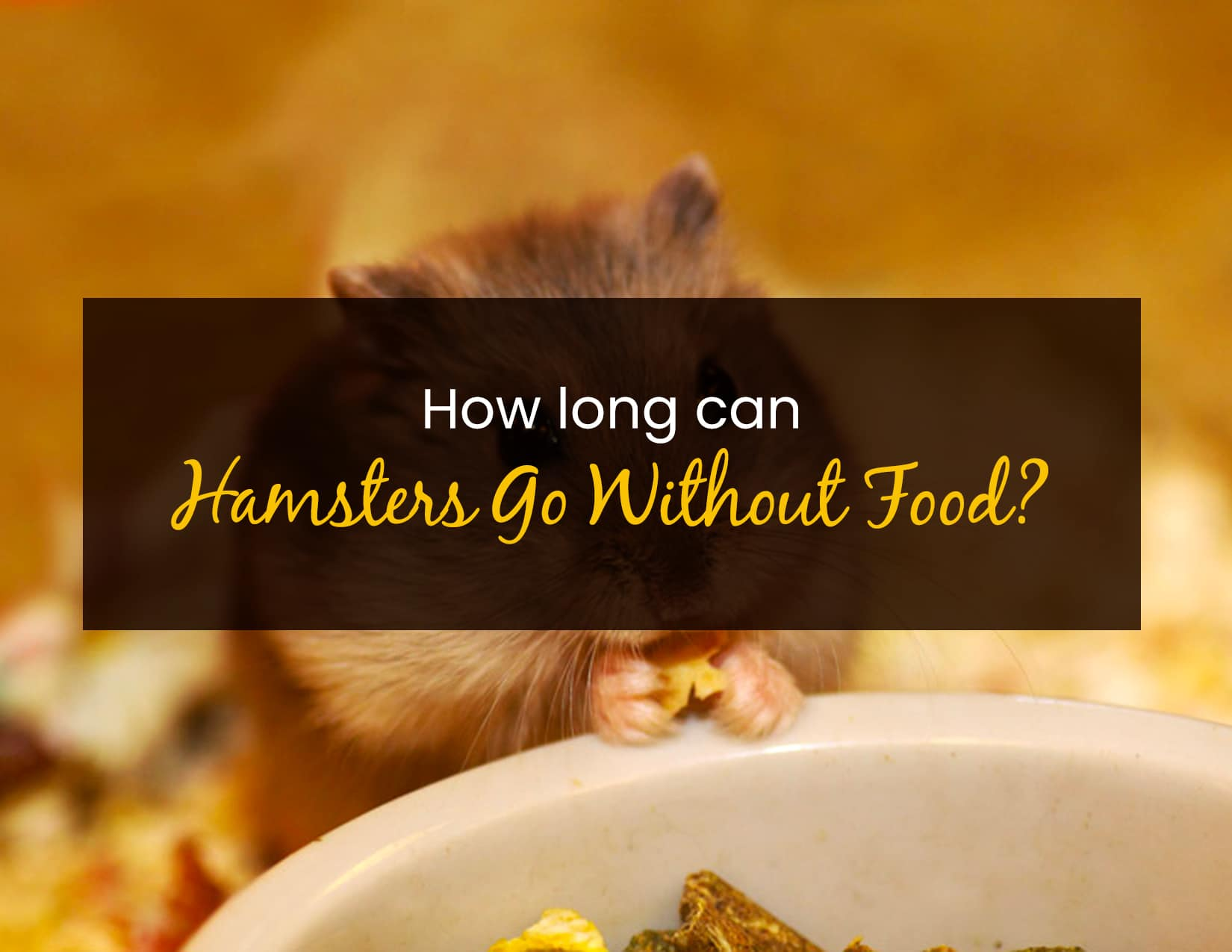 How Long Can Hamsters Go Without Food - WP