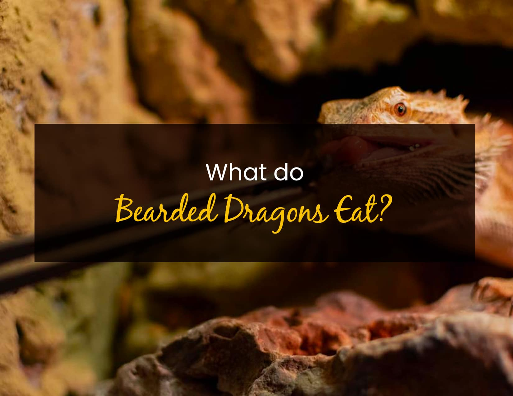 What Do Bearded Dragons Eat - WP