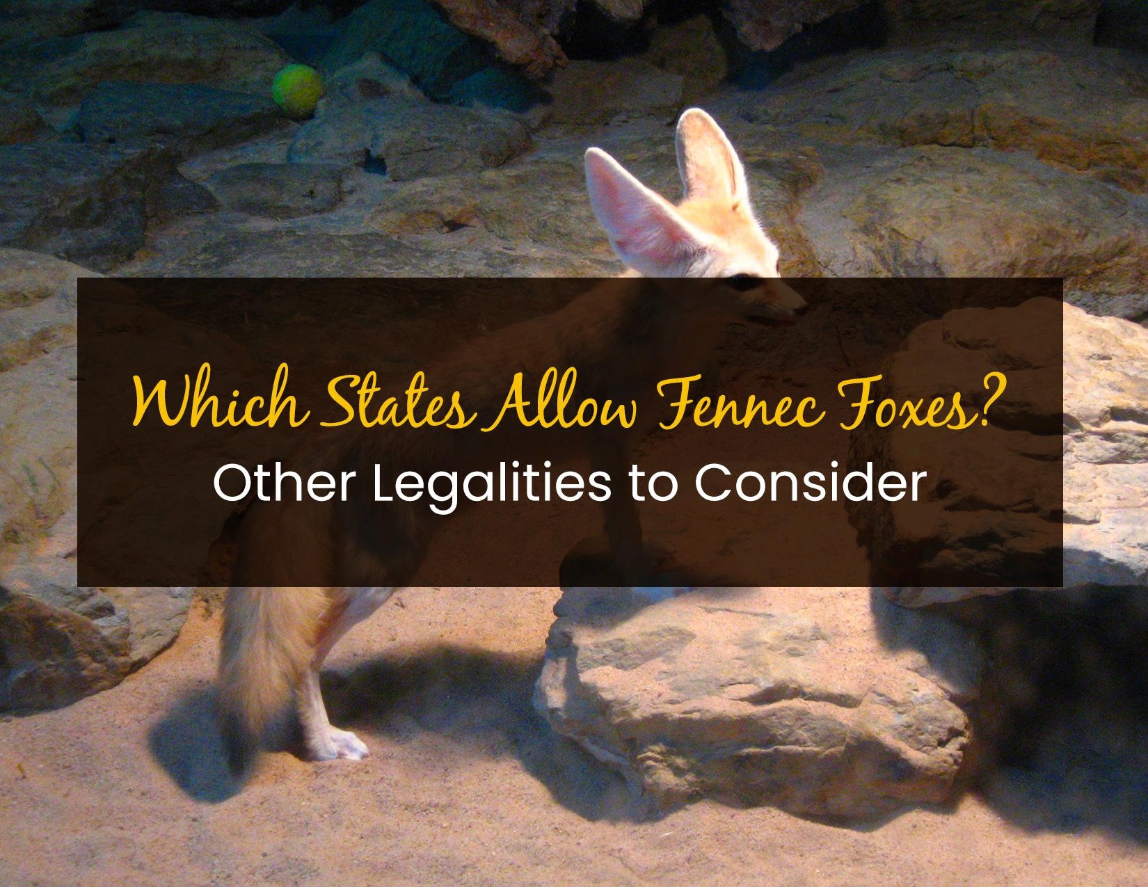 Which States Allow Fennec Foxes - WP