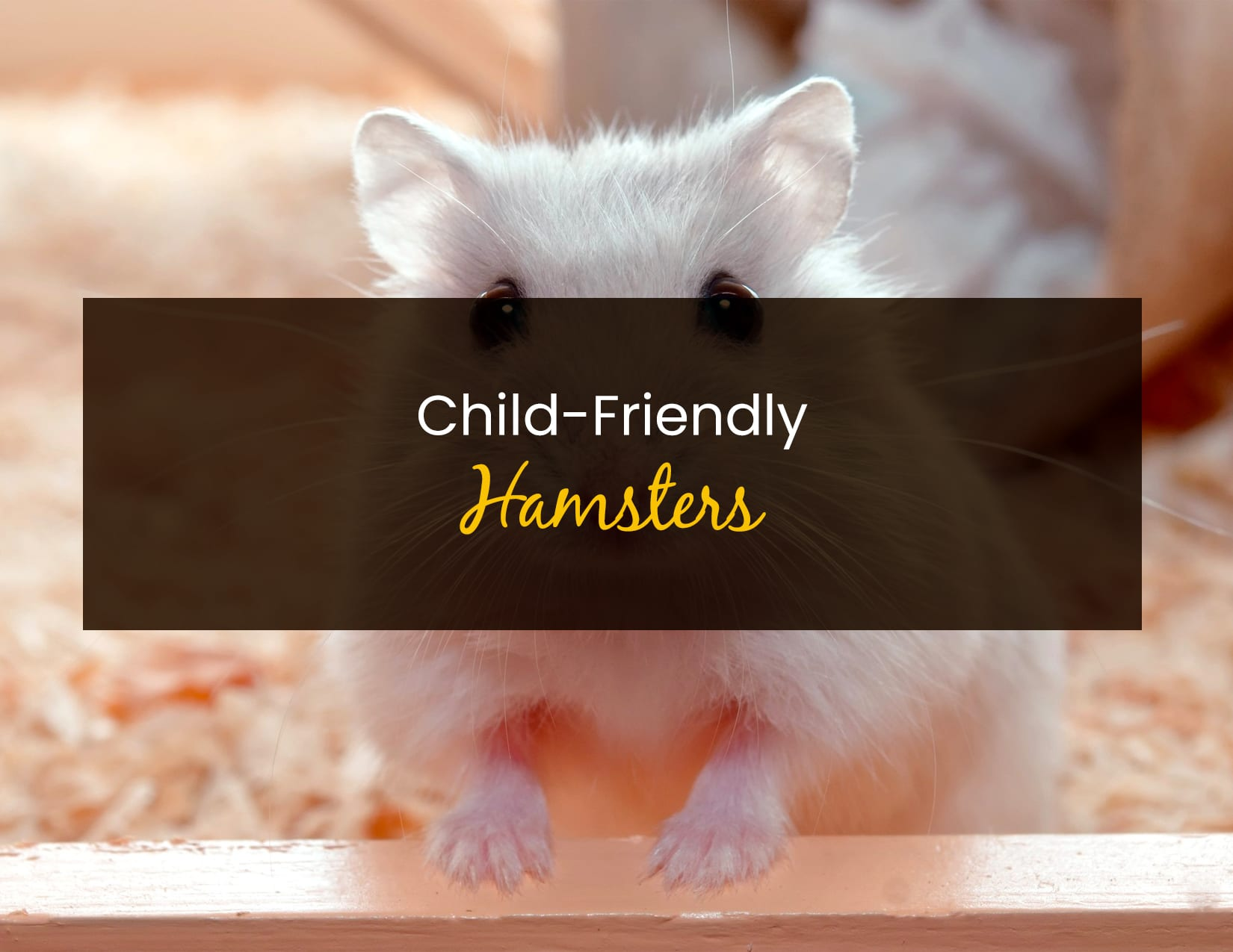 Child-Friendly Hamsters - WP