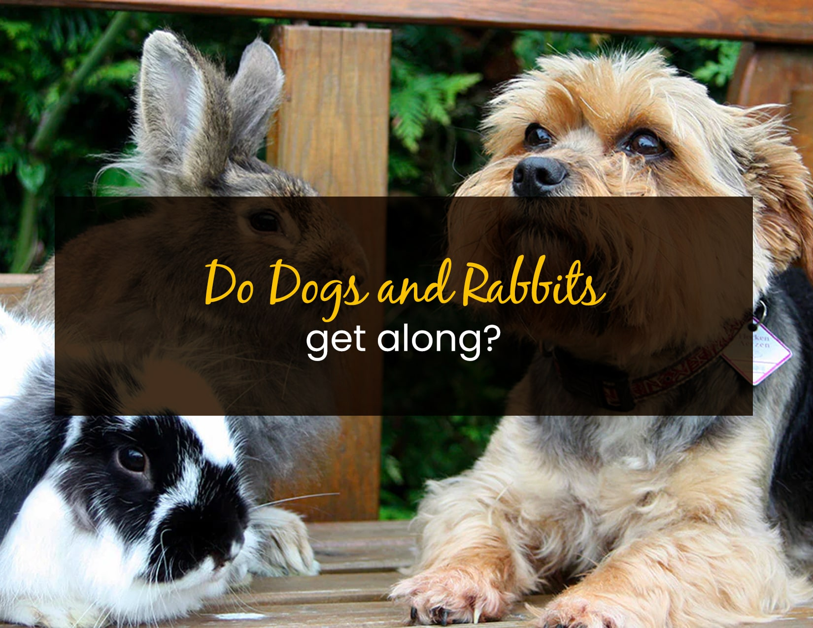 Do dogs and rabbits get along - WP