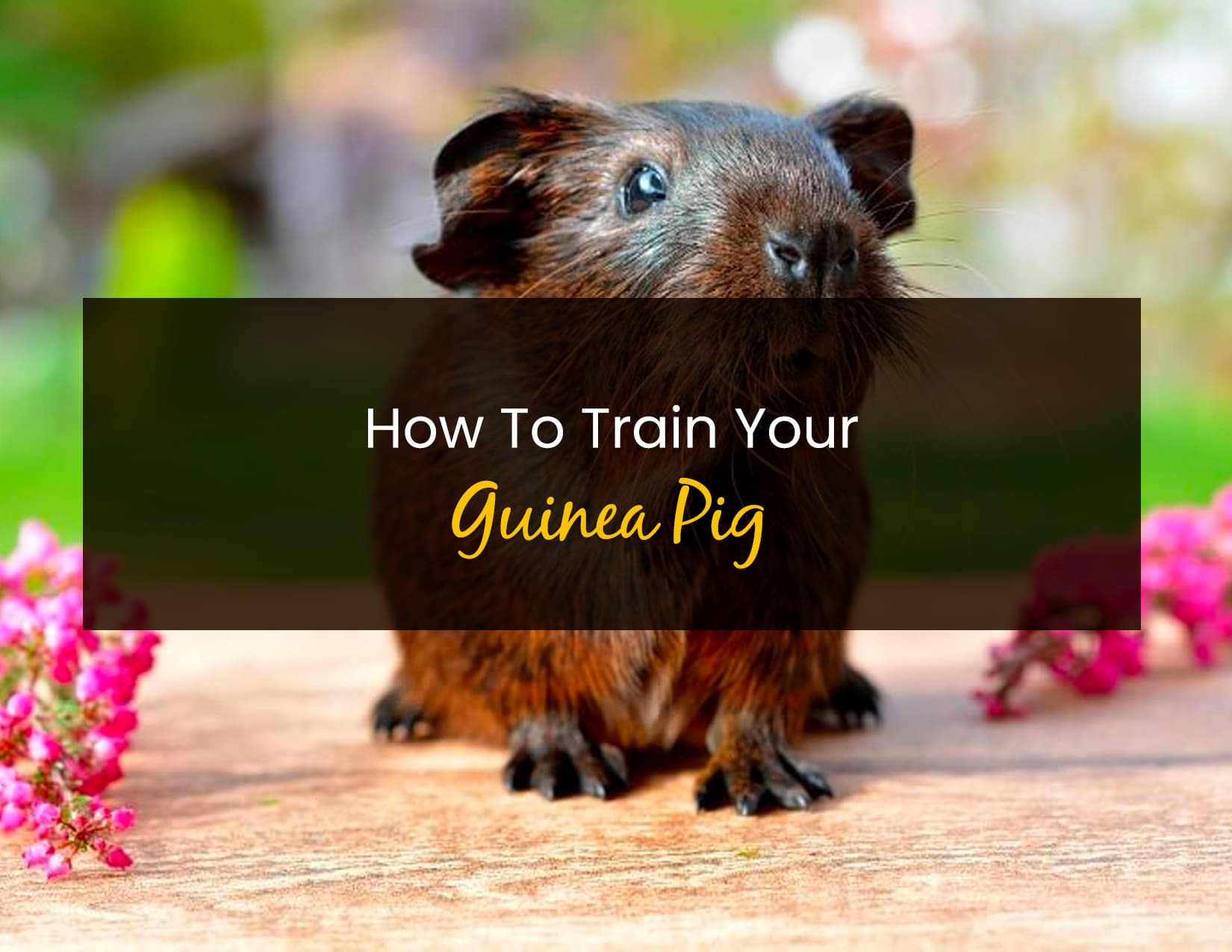 How To Train Your Guinea Pig - WP