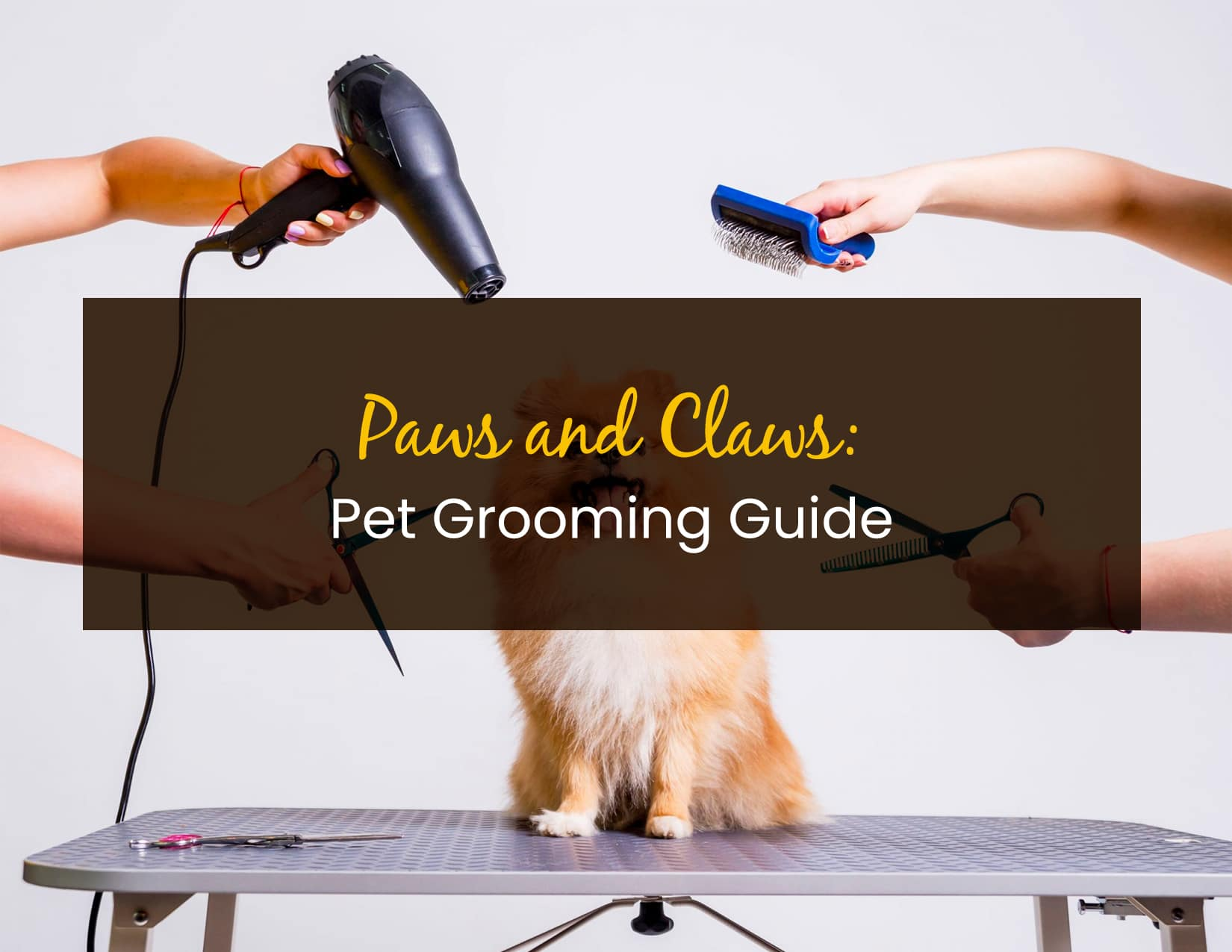 Paws and Claws- Pet Grooming Guide - WP
