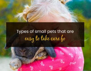 Types of Small Pets That are Easy to Take Care of - WP