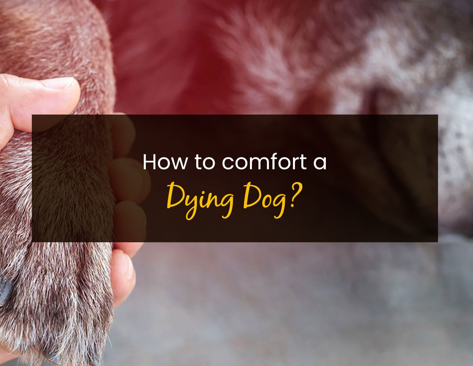 How To Comfort A Dying Dog - WP