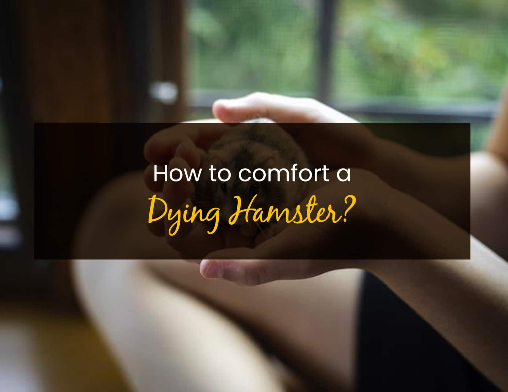 How To Comfort A Dying Hamster - WP