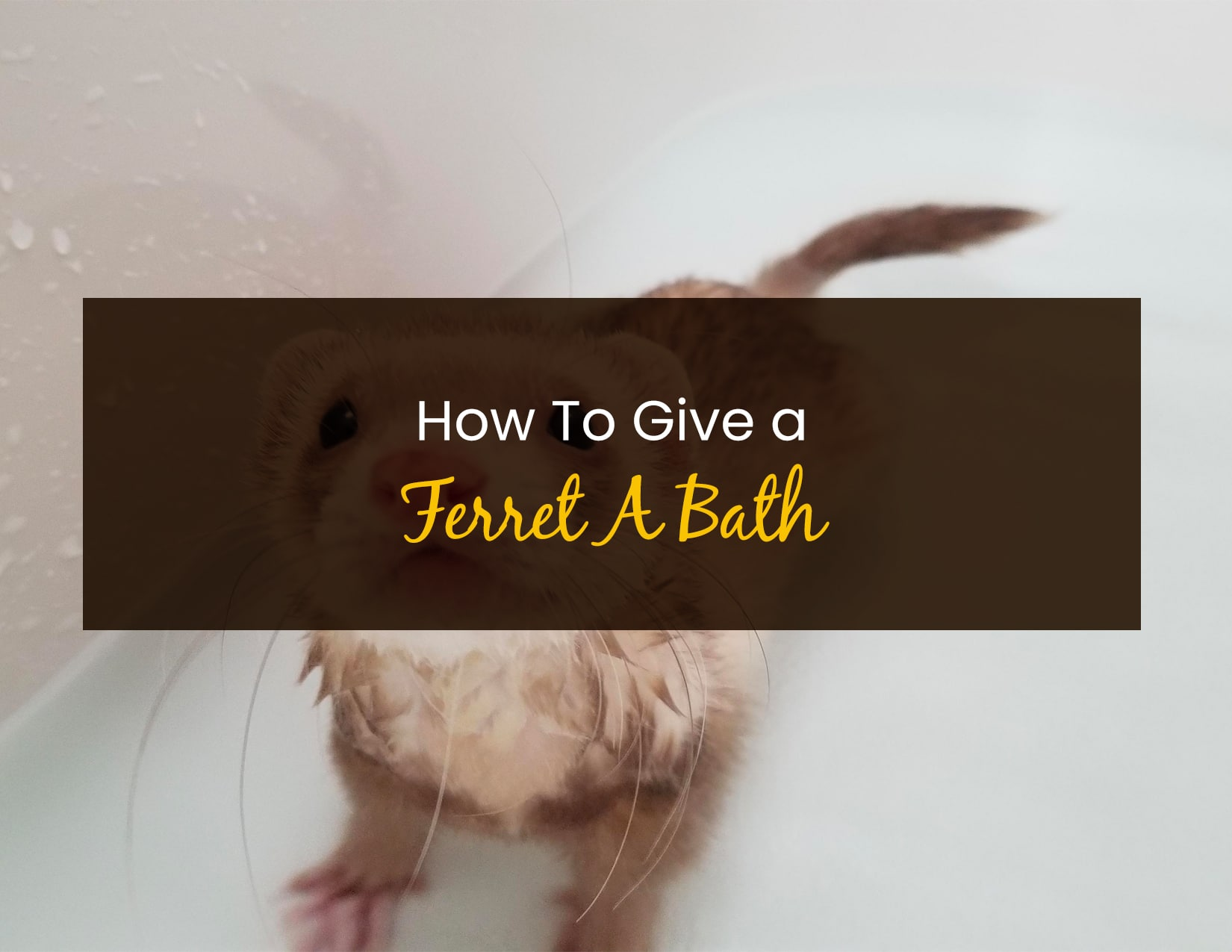 How To Give A Ferret A Bath - WP