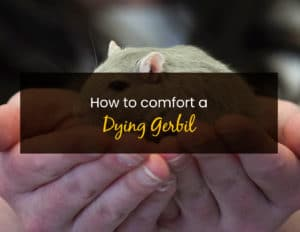 How to comfort a dying gerbil - WP