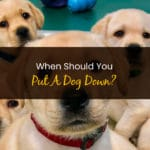 When Should You Put A Dog Down - WP