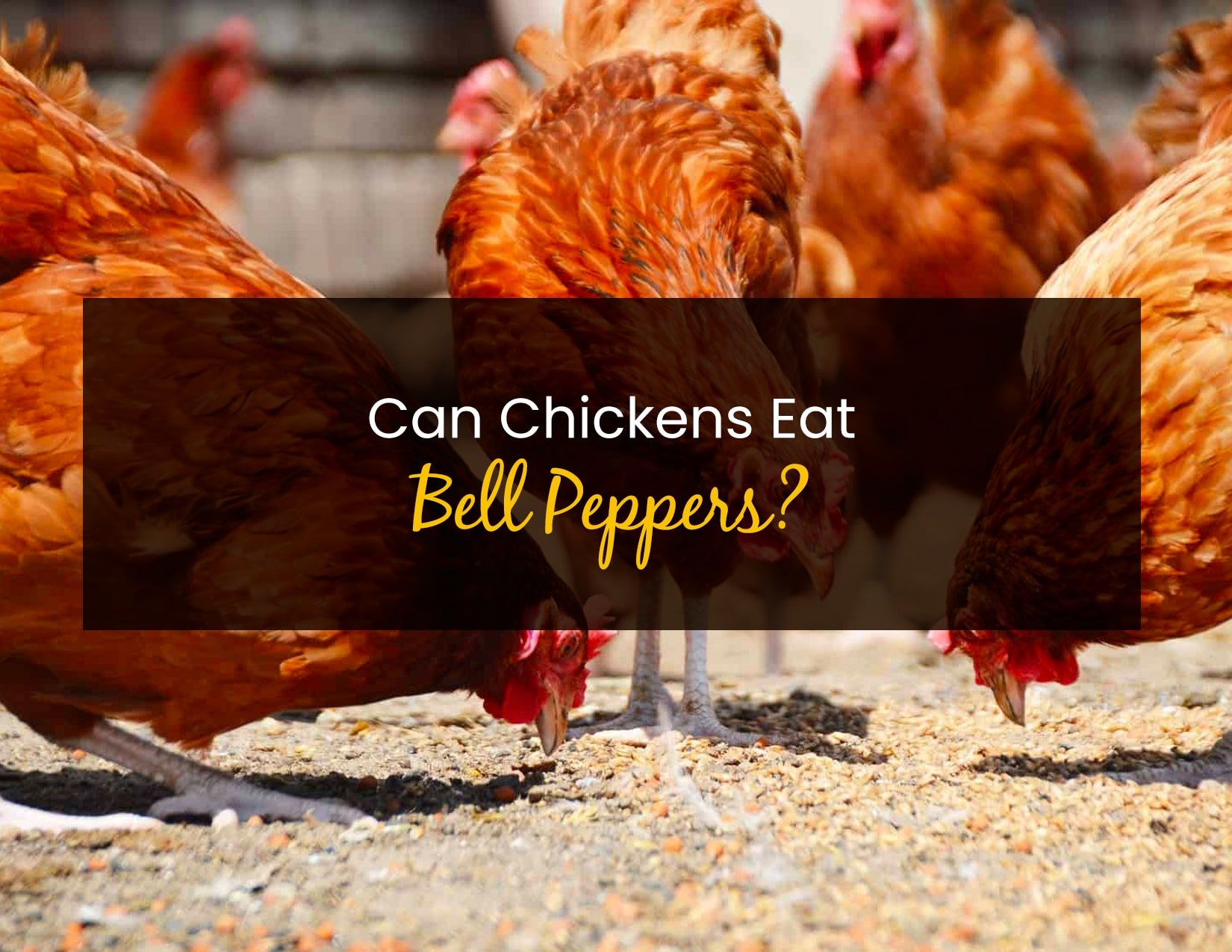 Can Chickens Eat Bell Peppers - WP